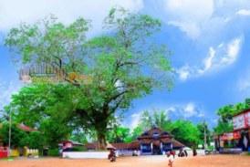 പൂനിലാര്ക്കാവ് ദേവീക്ഷേത്രത്തിലെ നവരാത്രി മഹോത്സവത്തിന് ബുധനാഴ്ച തുടക്കമാകും