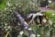 കാറ്റില് പ്ലാവ് മറിഞ്ഞ് വീണ് വീട് ഭാഗികമായി തകര്ന്നു