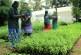 മന്ത്രിമണ്ഡലത്തെ ഔഷദോധ്യാനമാക്കാനൊരുങ്ങി മറ്റത്തൂര് ലേബര്സഹകരണസംഘം