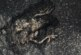 നിരത്തില് പൊലിച്ച ജീവജാലങ്ങള്ക്ക് ജീവന്തുടിക്കുന്ന ദൃശ്യഭാഷ്യം